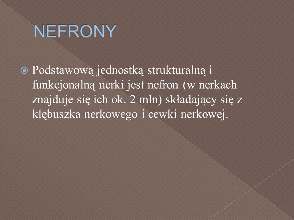 NEFRONY