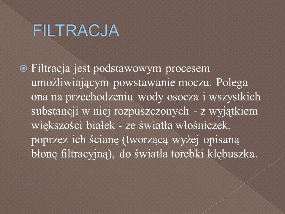 FILTRACJA