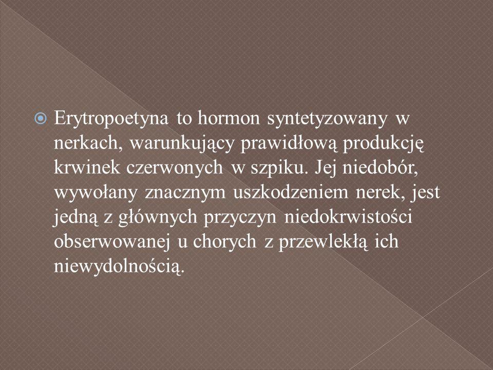 Erytropoetyna to hormon syntetyzowany w nerkach, warunkujący prawidłową produkcję krwinek czerwonych w szpiku.