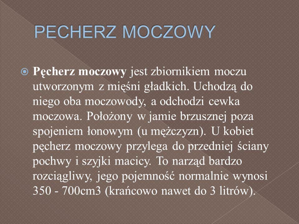 PECHERZ MOCZOWY