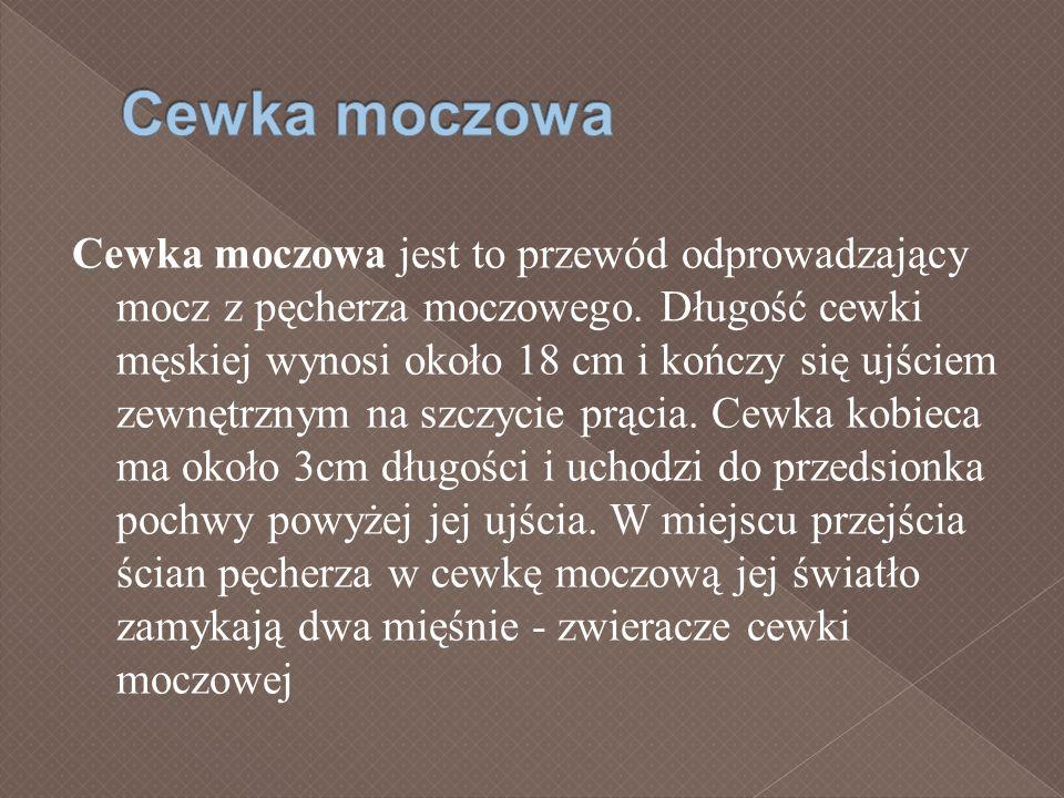 Cewka moczowa