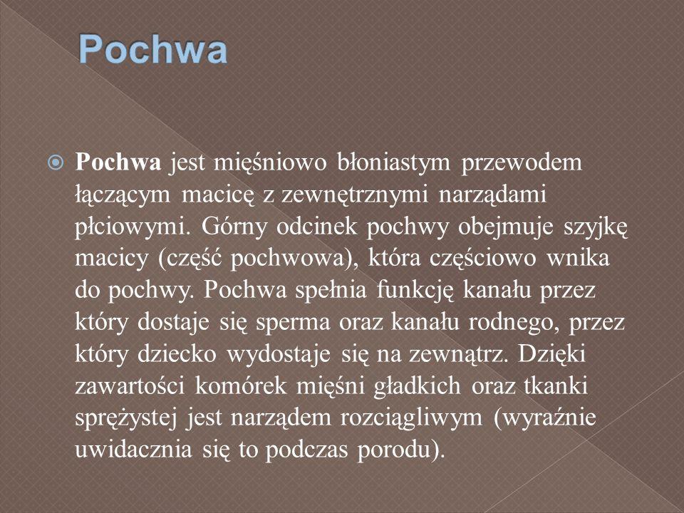 Pochwa