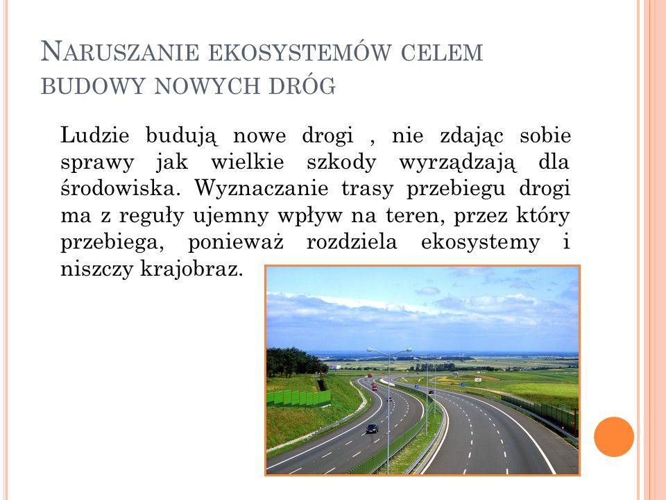 Naruszanie ekosystemów celem budowy nowych dróg