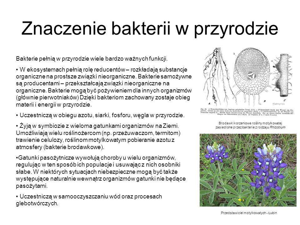 Znaczenie bakterii w przyrodzie