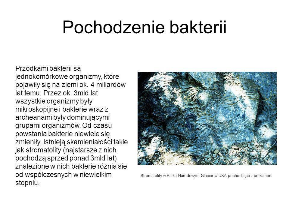 Pochodzenie bakterii