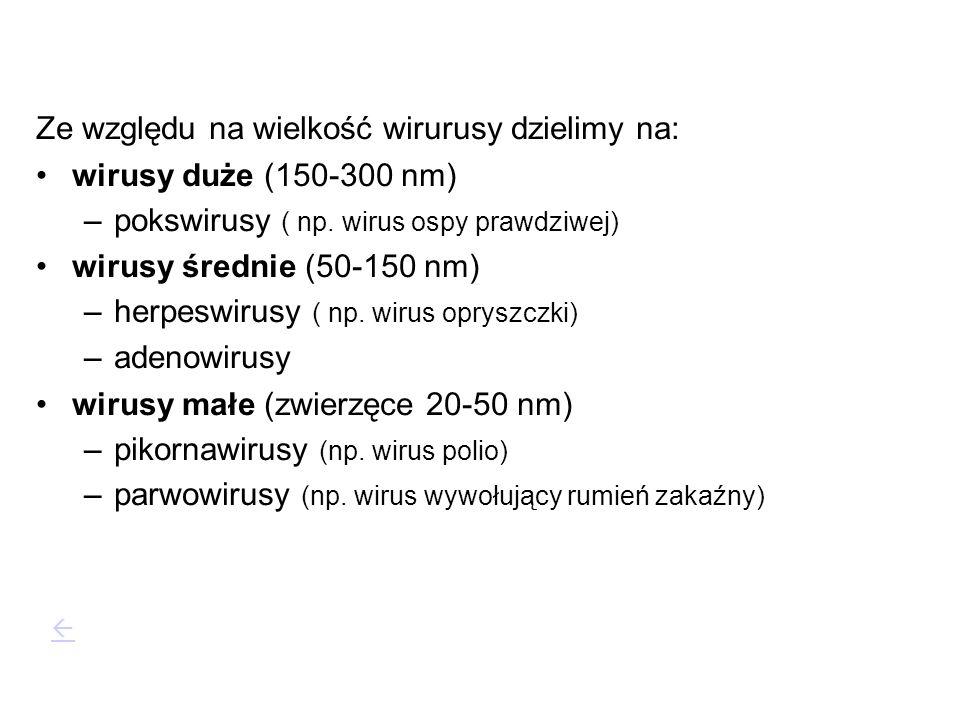 Ze względu na wielkość wirurusy dzielimy na: wirusy duże (150-300 nm)