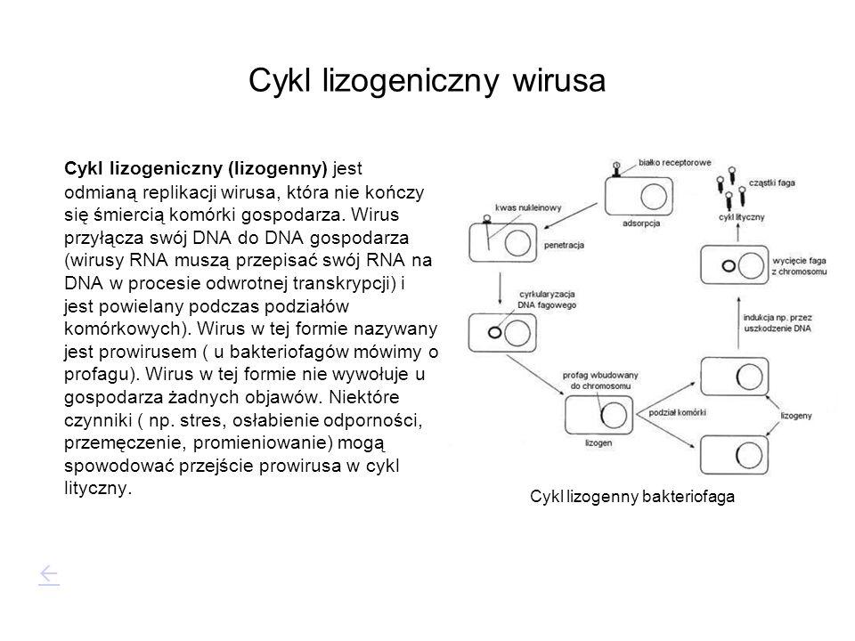 Cykl lizogeniczny wirusa