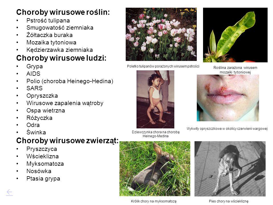 Choroby wirusowe roślin: