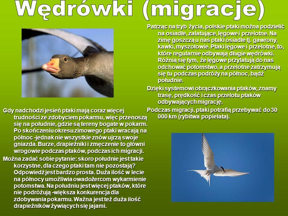 Wędrówki (migracje)