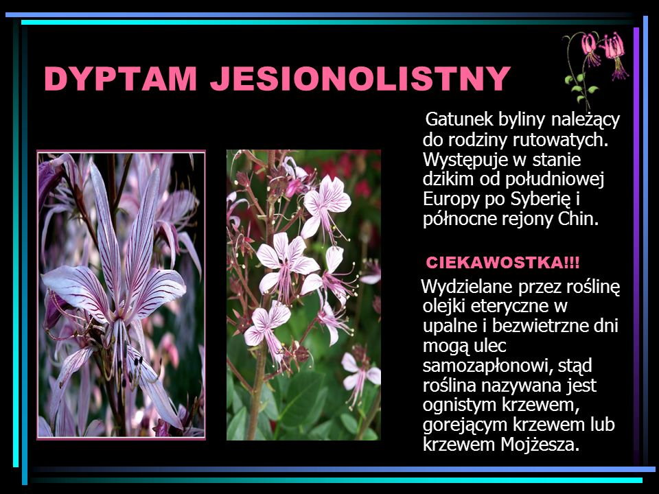 DYPTAM JESIONOLISTNY
