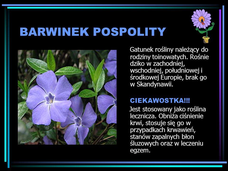 BARWINEK POSPOLITY