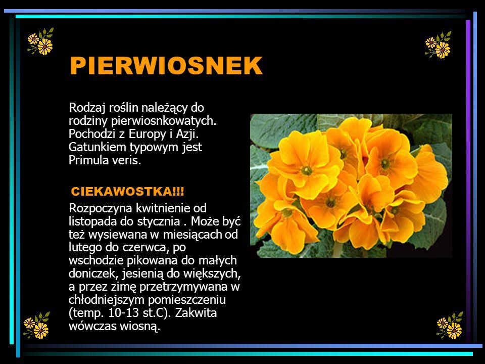 PIERWIOSNEK Rodzaj roślin należący do rodziny pierwiosnkowatych. Pochodzi z Europy i Azji. Gatunkiem typowym jest Primula veris.