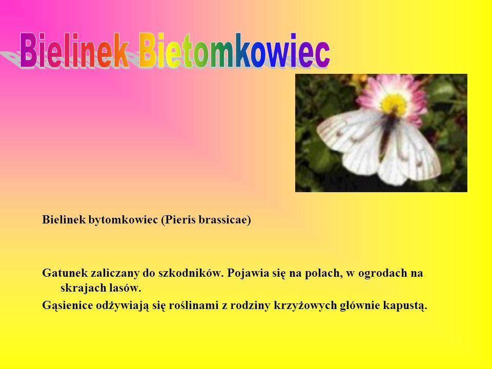 Bielinek Bietomkowiec
