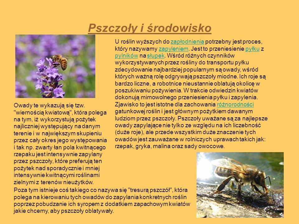 Pszczoły i środowisko