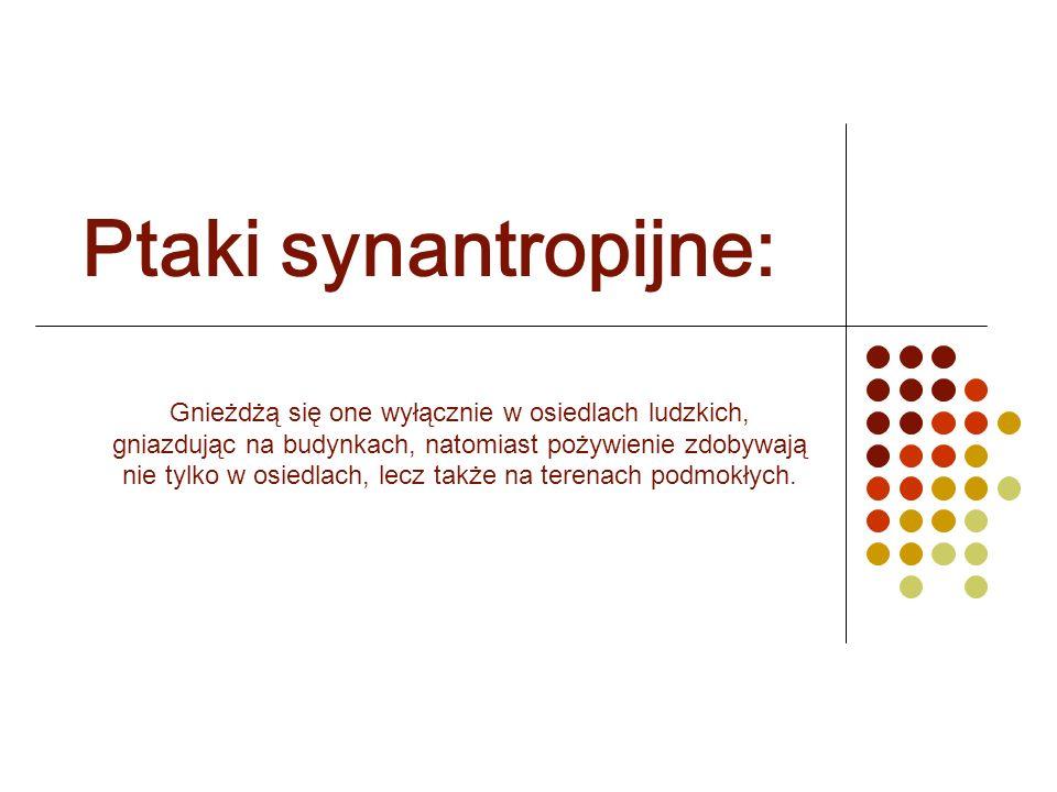 Ptaki synantropijne: