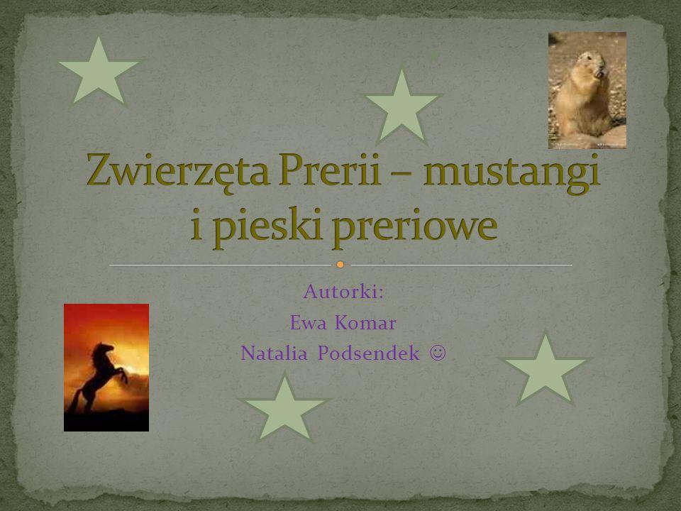Zwierzęta Prerii – mustangi i pieski preriowe
