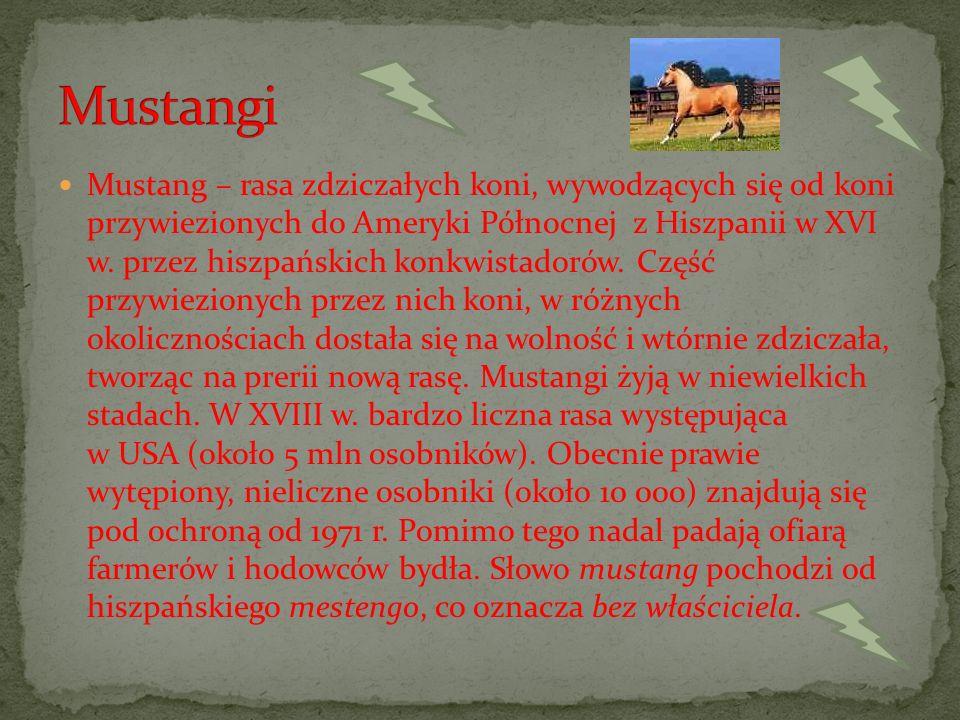 Mustangi