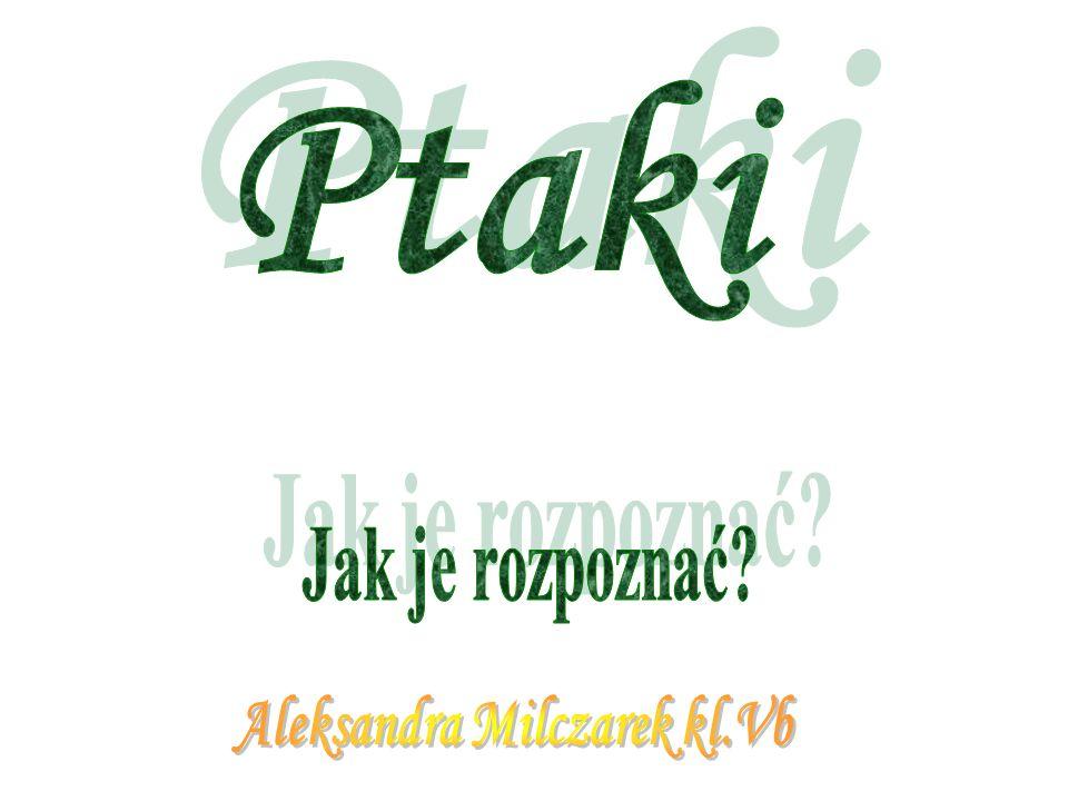 Aleksandra Milczarek kl.Vb