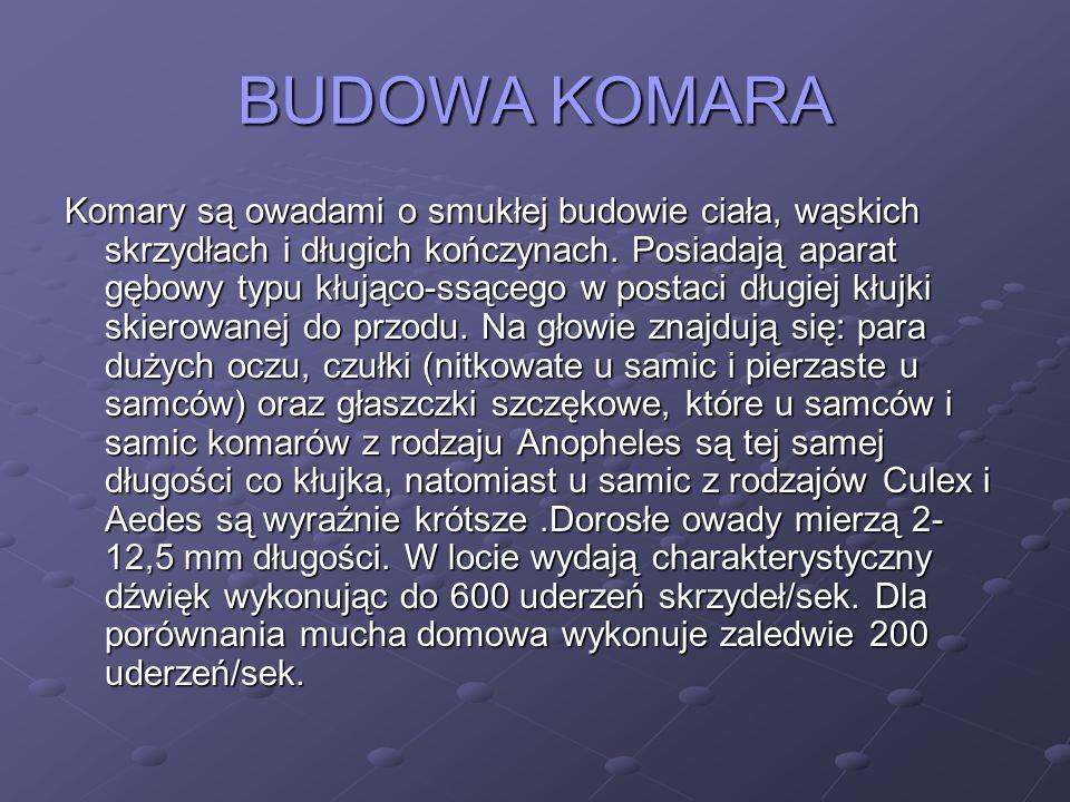 BUDOWA KOMARA