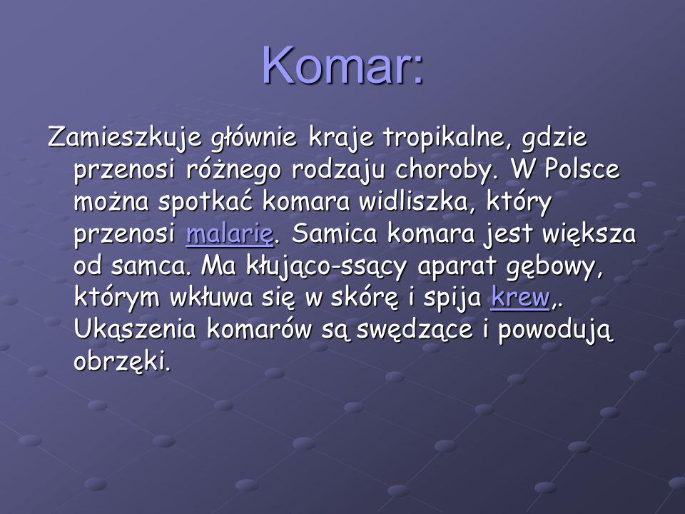 Komar: