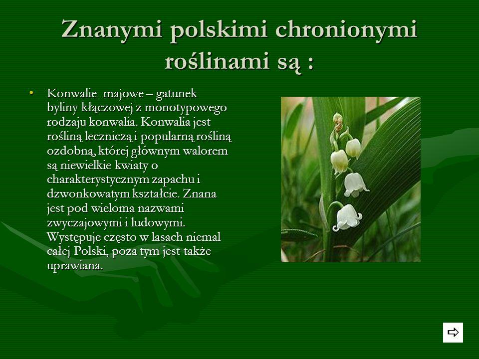 Znanymi polskimi chronionymi roślinami są :