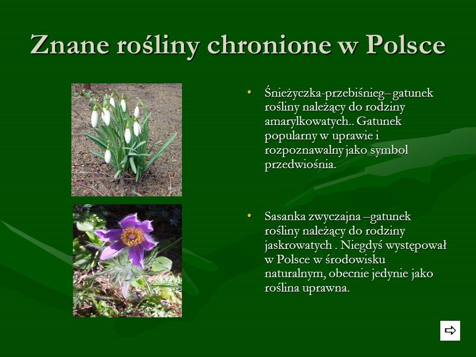 Znane rośliny chronione w Polsce