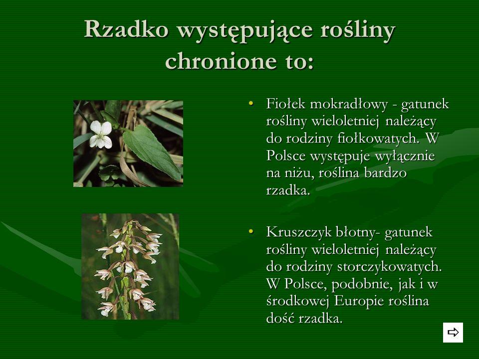 Rzadko występujące rośliny chronione to: