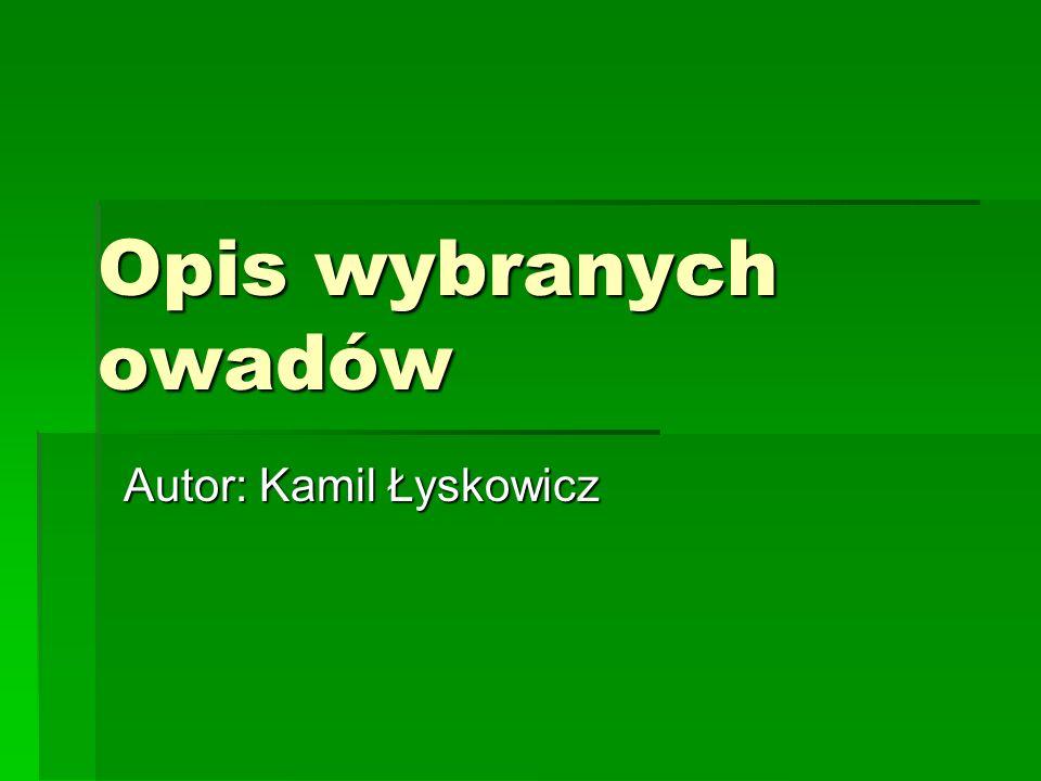 Autor: Kamil Łyskowicz