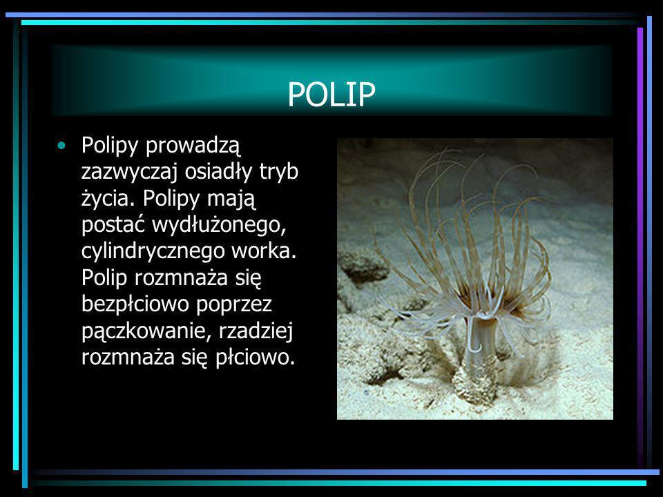 POLIP