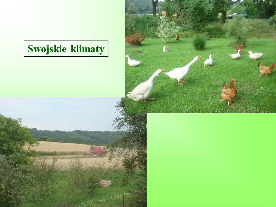 Swojskie klimaty