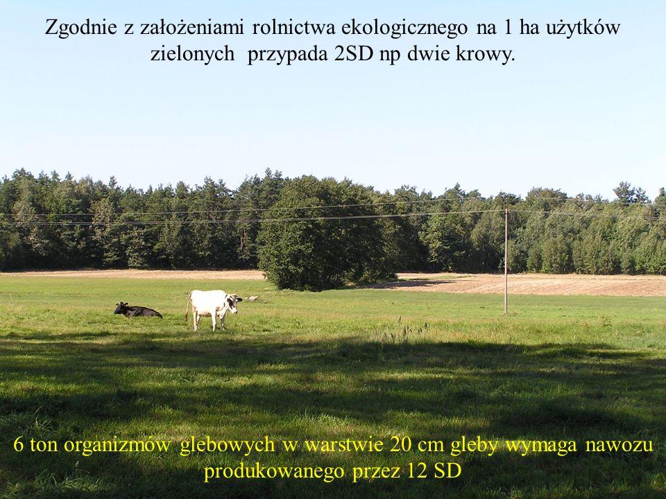 Zgodnie z założeniami rolnictwa ekologicznego na 1 ha użytków zielonych przypada 2SD np dwie krowy.