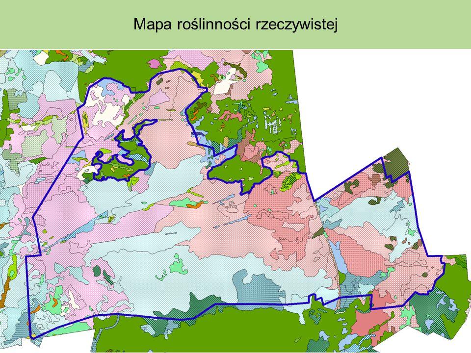 Mapa roślinności rzeczywistej