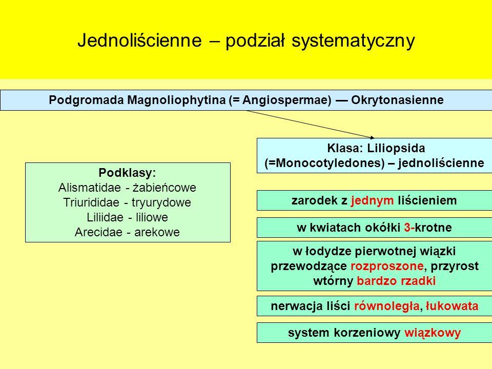 Jednoliścienne – podział systematyczny