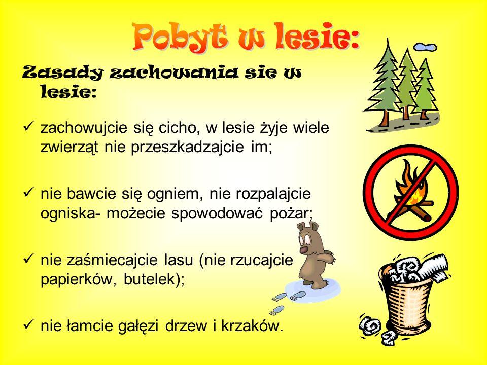 Pobyt w lesie: Zasady zachowania sie w lesie:
