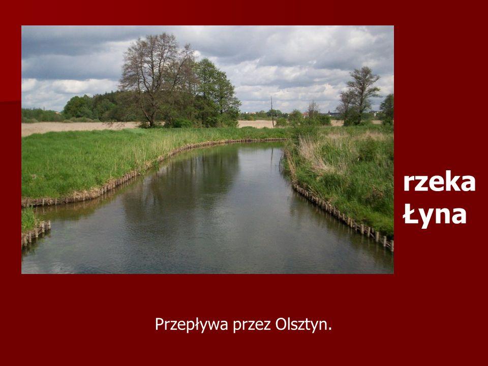 Przepływa przez Olsztyn.