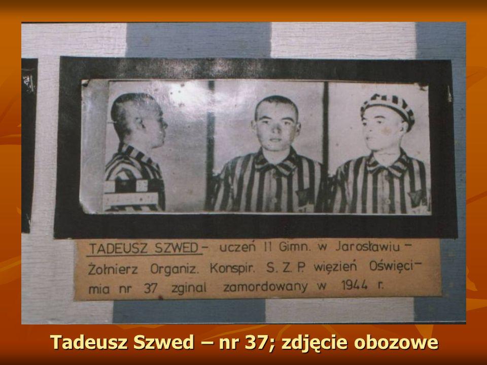 Tadeusz Szwed – nr 37; zdjęcie obozowe