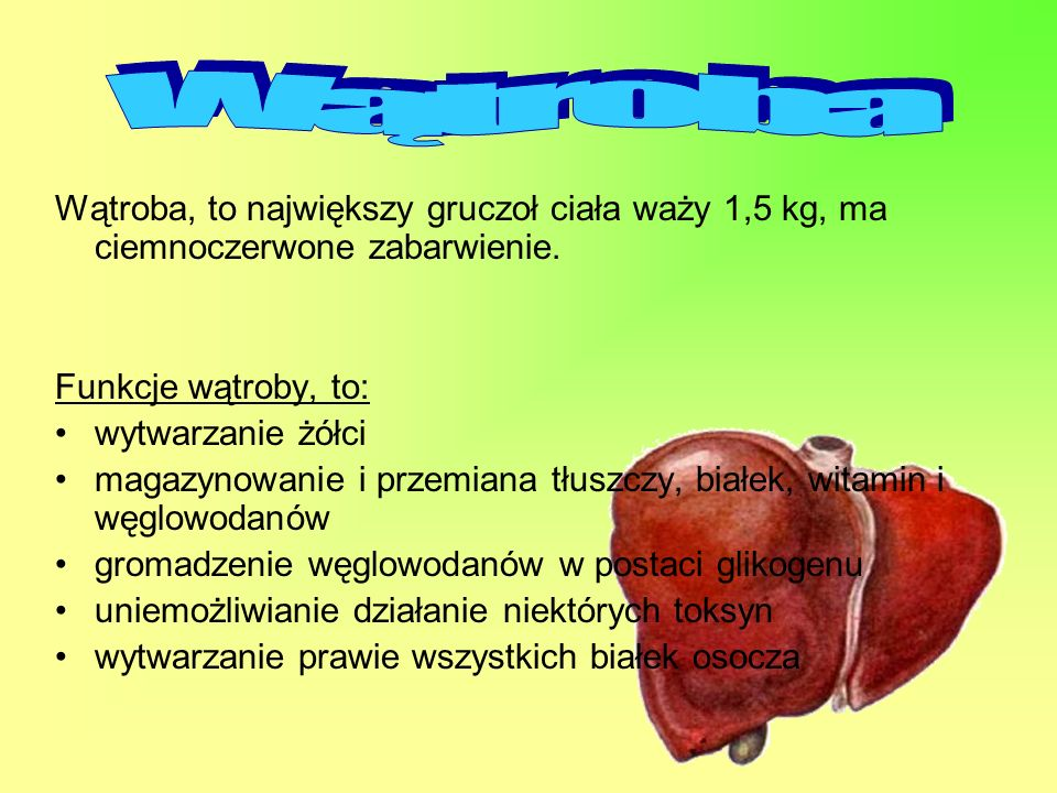 Wątroba Wątroba, to największy gruczoł ciała waży 1,5 kg, ma ciemnoczerwone zabarwienie. Funkcje wątroby, to: