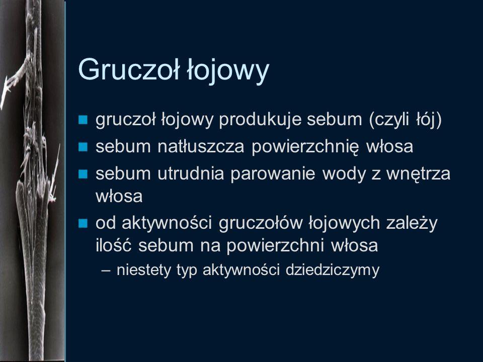 Gruczoł łojowy gruczoł łojowy produkuje sebum (czyli łój)