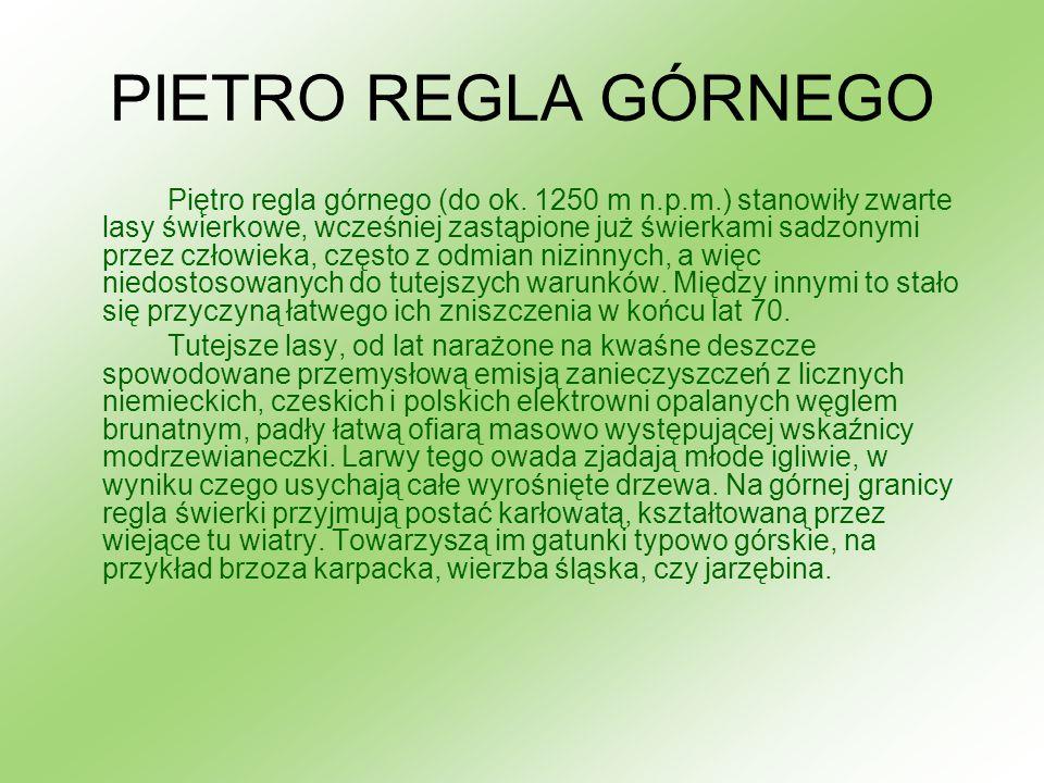 PIETRO REGLA GÓRNEGO