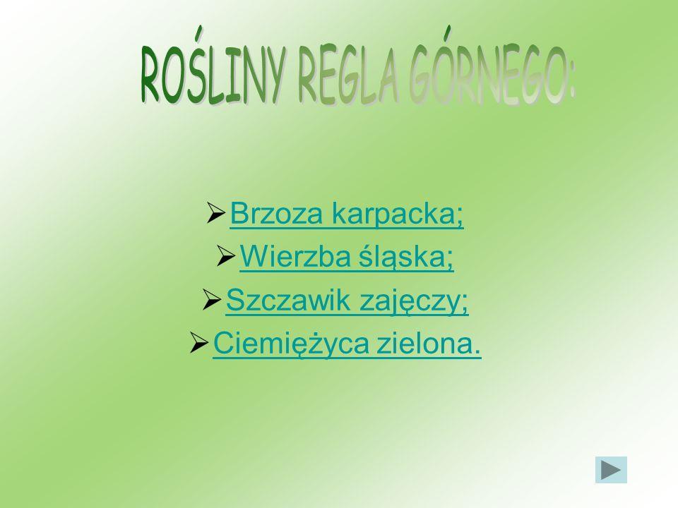 ROŚLINY REGLA GÓRNEGO:
