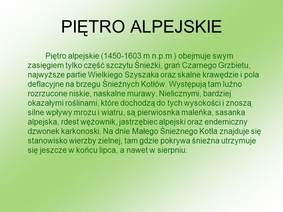 PIĘTRO ALPEJSKIE