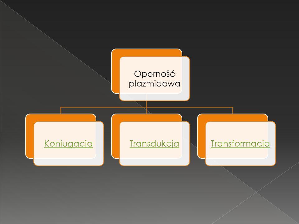 Oporność plazmidowa Koniugacja Transdukcja Transformacja