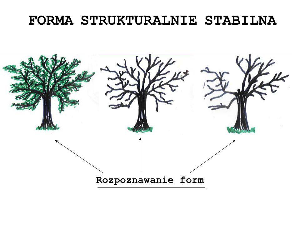FORMA STRUKTURALNIE STABILNA