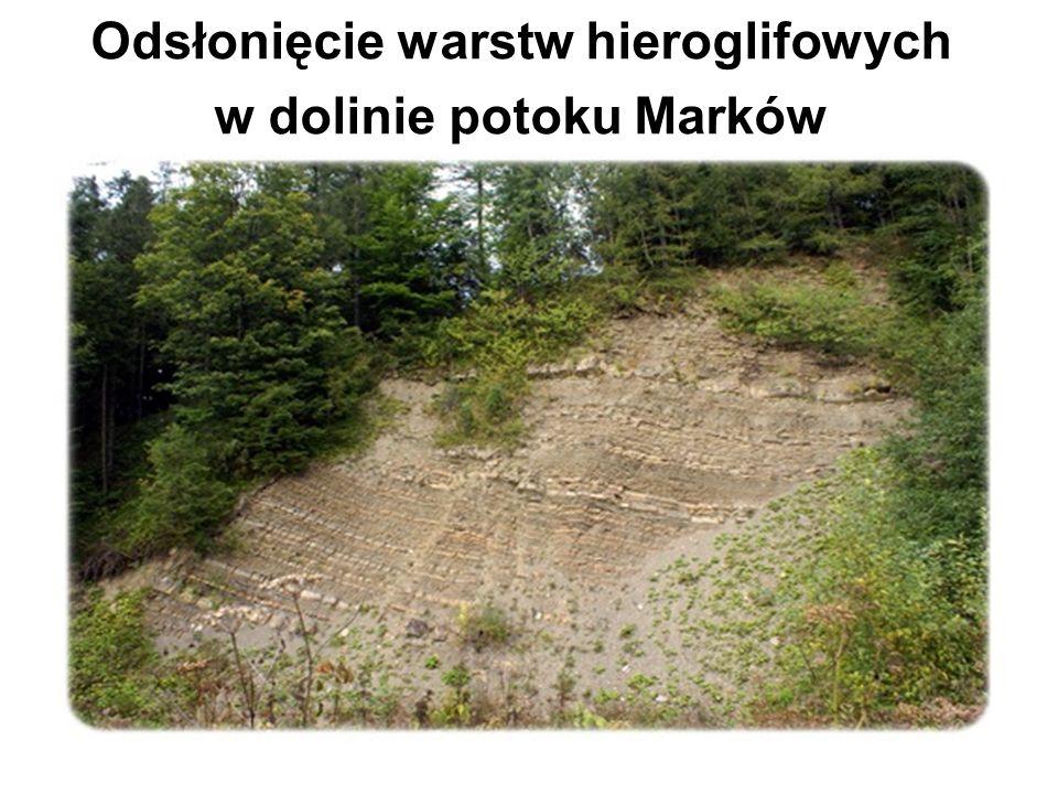 Odsłonięcie warstw hieroglifowych w dolinie potoku Marków