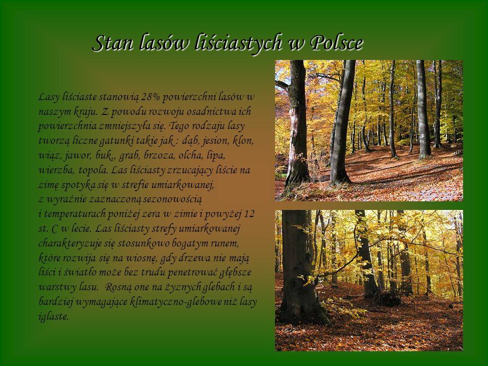 Stan lasów liściastych w Polsce