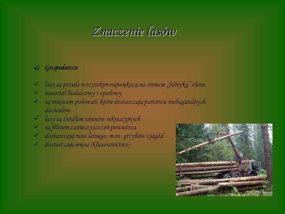 Znaczenie lasów Gospodarcze