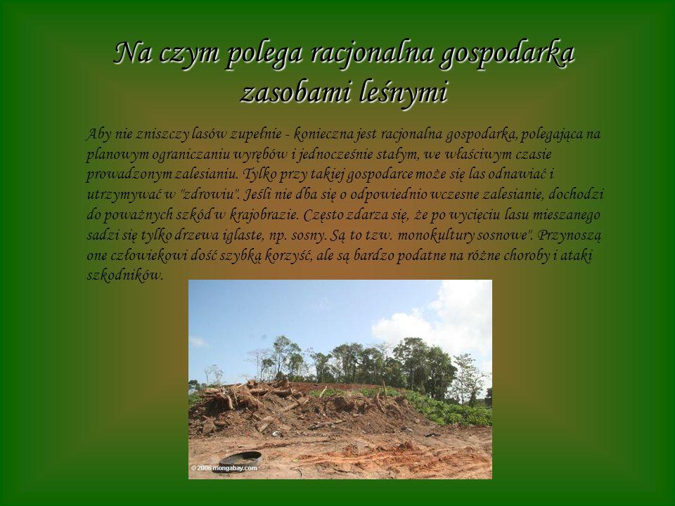 Na czym polega racjonalna gospodarka zasobami leśnymi