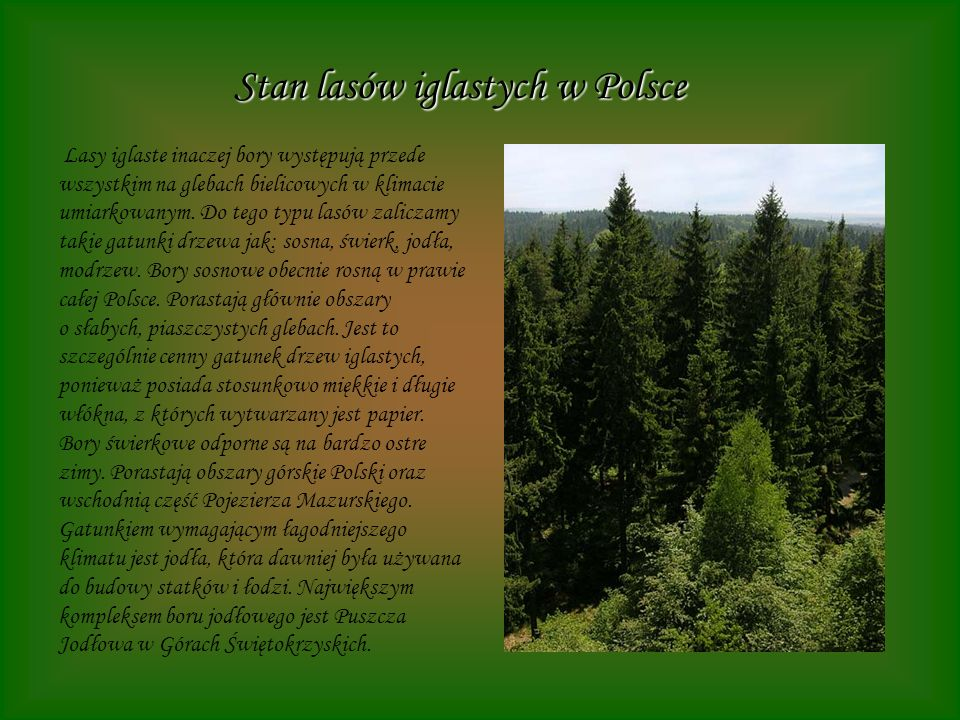 Stan lasów iglastych w Polsce