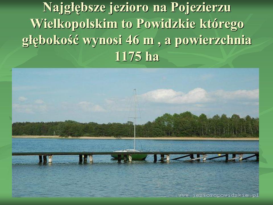 Najgłębsze jezioro na Pojezierzu Wielkopolskim to Powidzkie którego głębokość wynosi 46 m , a powierzchnia 1175 ha