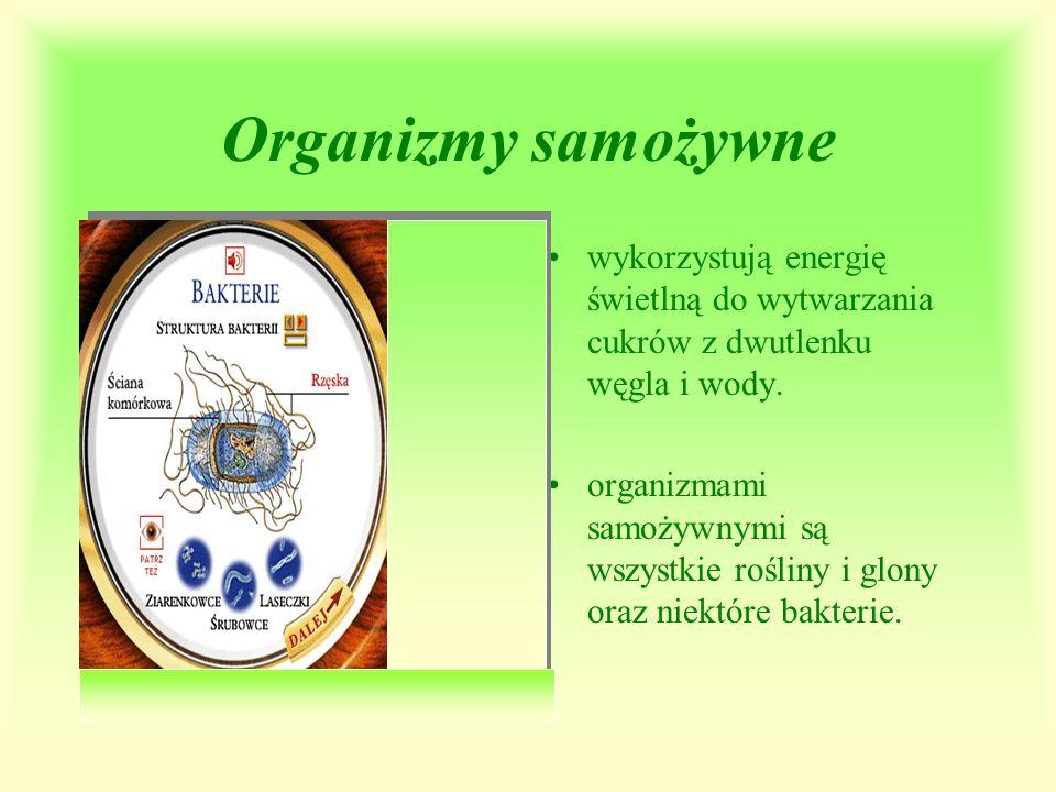 Organizmy samożywne wykorzystują energię świetlną do wytwarzania cukrów z dwutlenku węgla i wody.